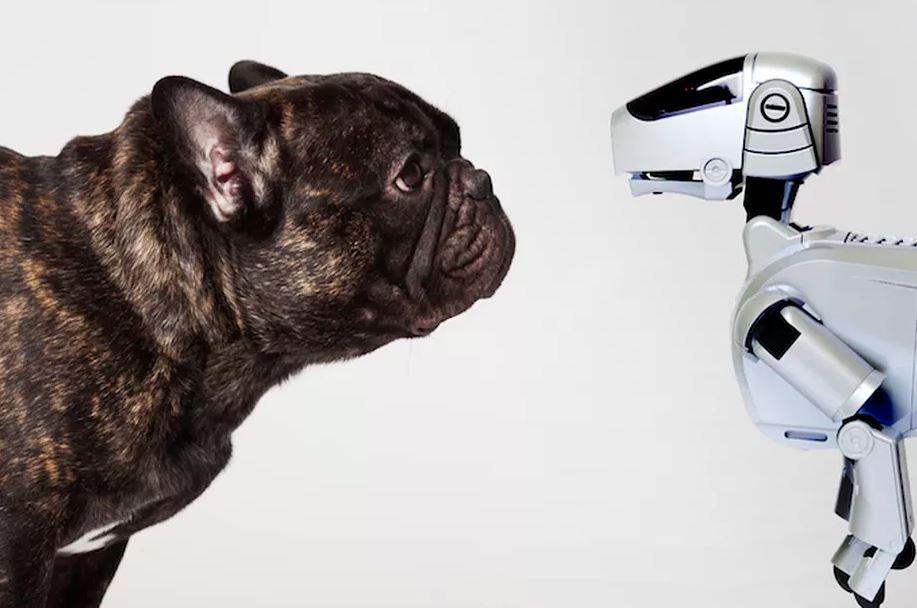 Tabletowo.pl Pamiętacie psa-robota AIBO od Sony? Pojawi się jego następca! Sony