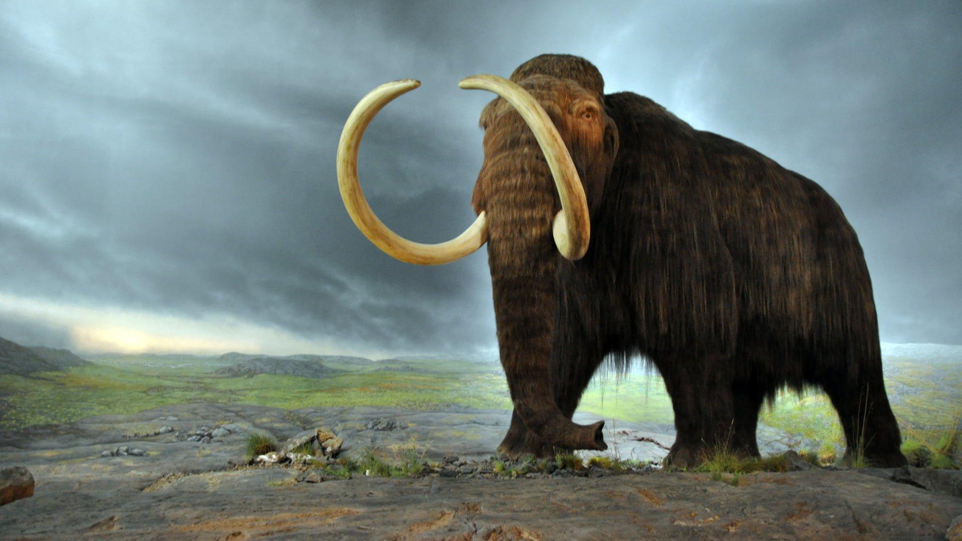 mininauka2_mamut