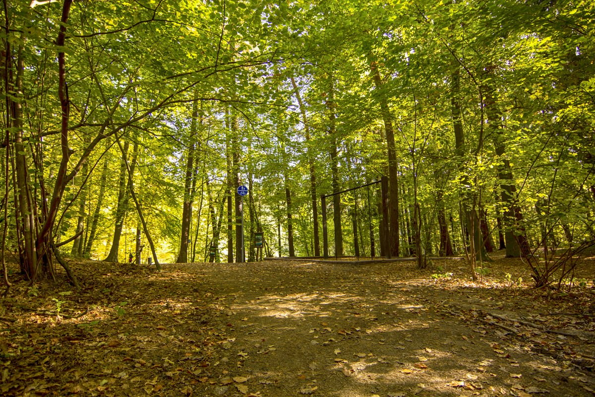 Lasy Państwowe też chcą mieć swoją sieć ładowarek do samochodów elektrycznych 25
