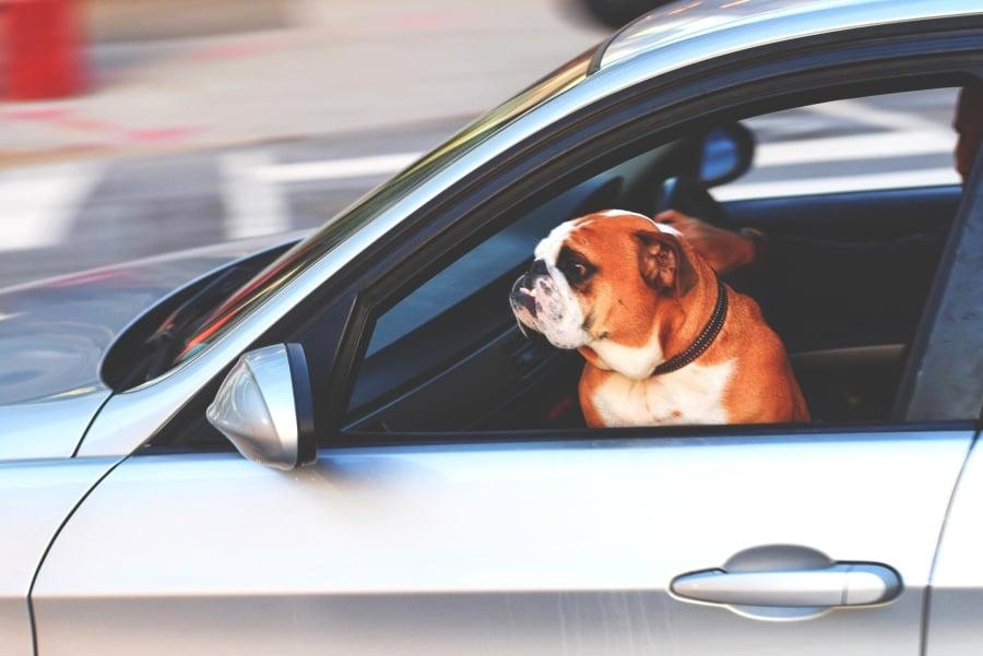 """Tabletowo.pl W tym tygodniu rozpocznie się aktualizacja samochodów Tesli, dodająca """"tryb psa"""" Ciekawostki Moto"""