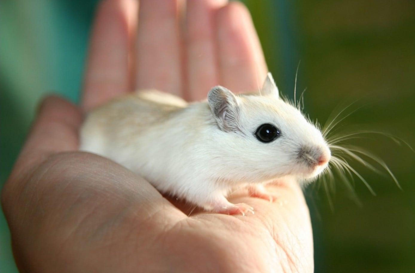 NASA wysłała myszy w kosmos. Wyniki eksperymentu są niezamierzenie zabawne 15