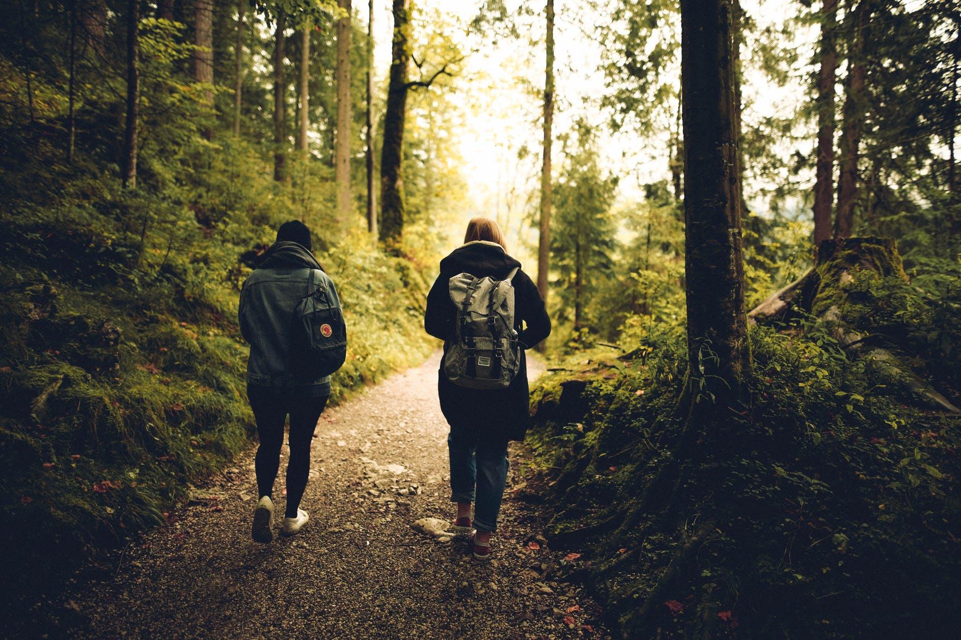 Wybierasz się do lasu? Promieniowanie emitowane przez twój smartfon może przyciągać kleszcze