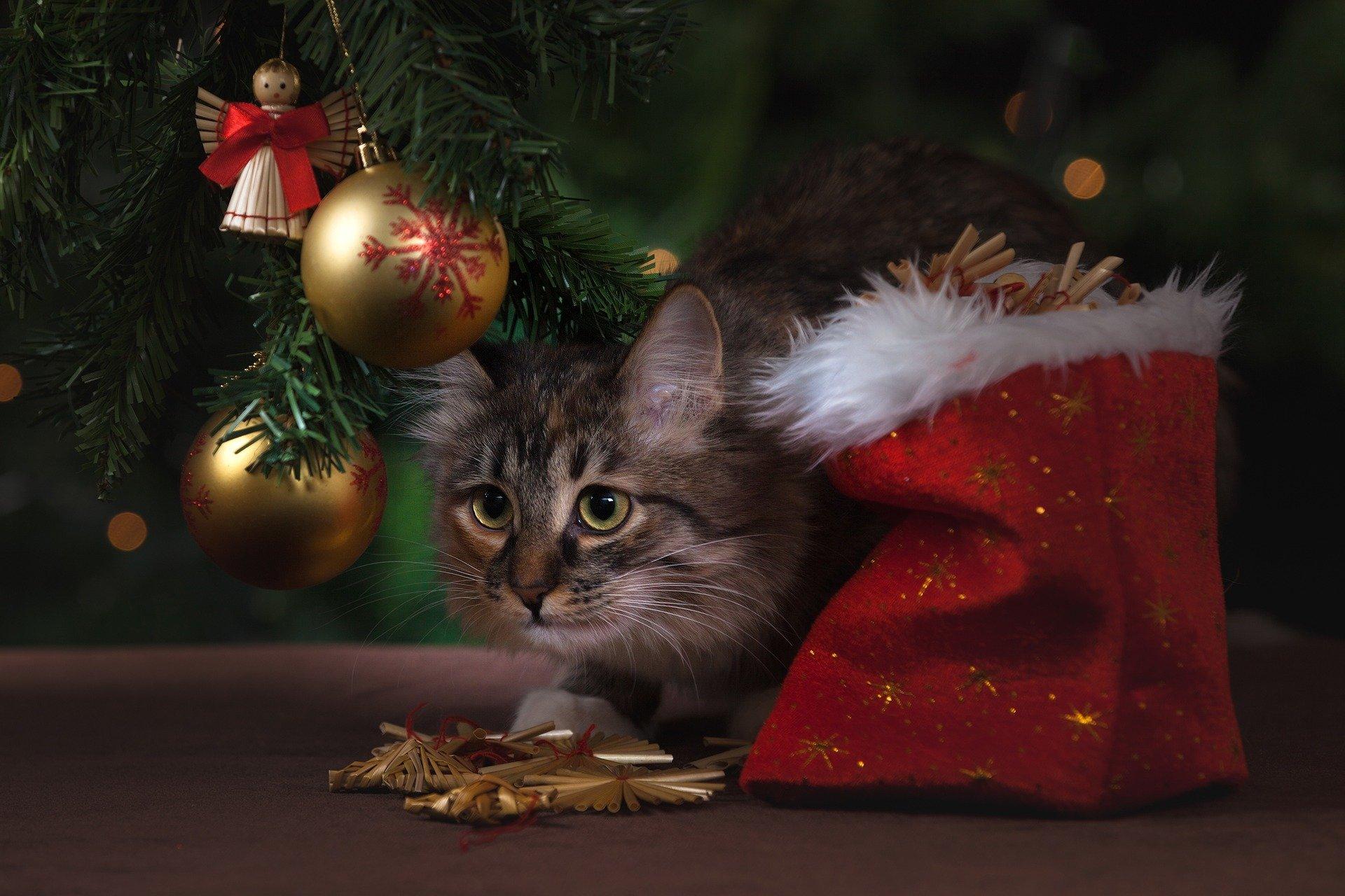 kot cat choinka prezenty