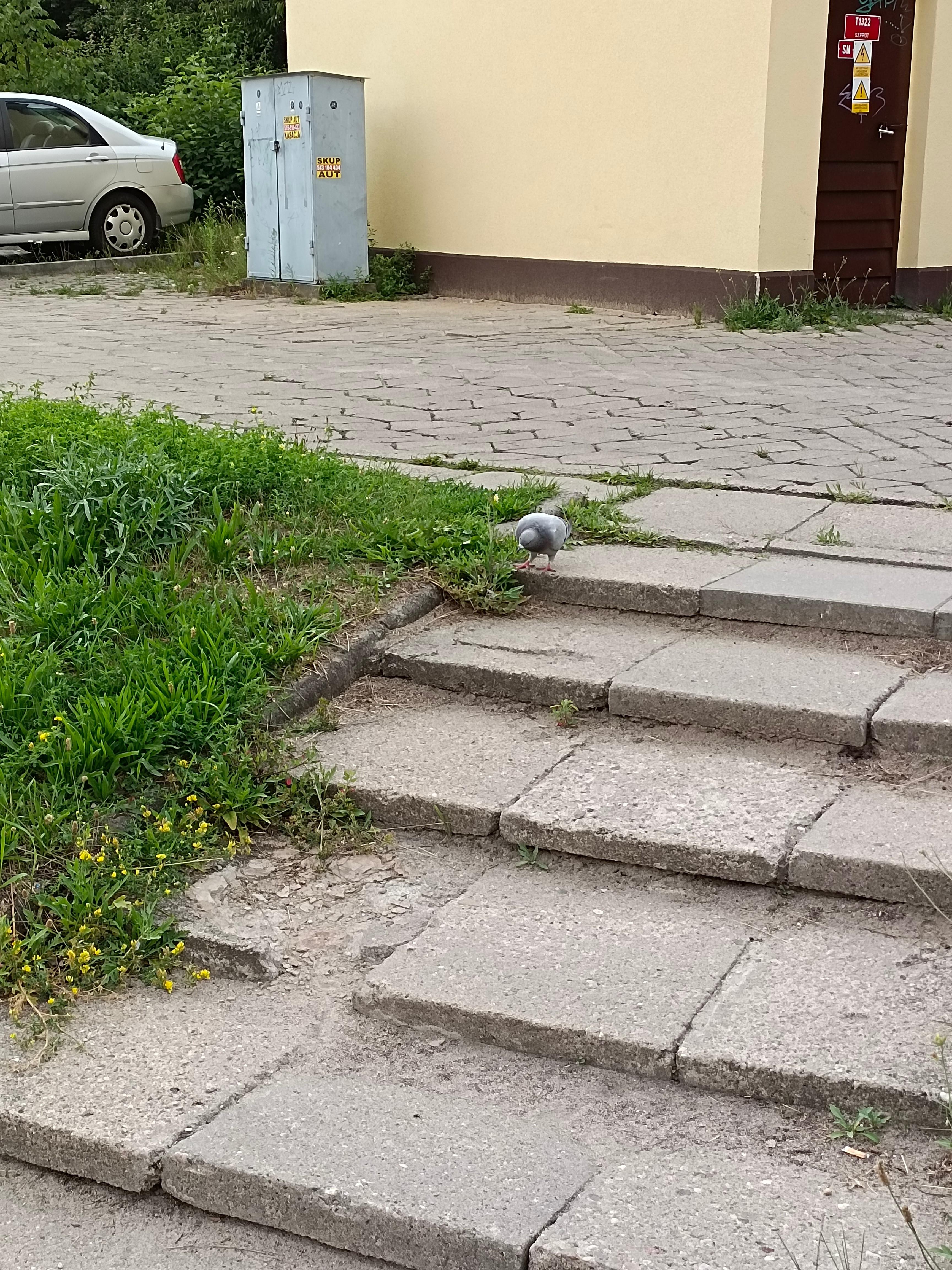 Recenzja Vivo Y72 5G - Fotografia dzienna- fot. Tabletowo.pl
